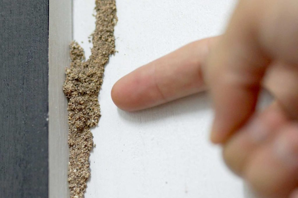 3 Ways to Know If You Have Termites