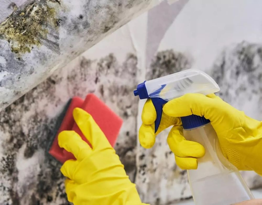 Does Your House Have Mold Important Symptoms