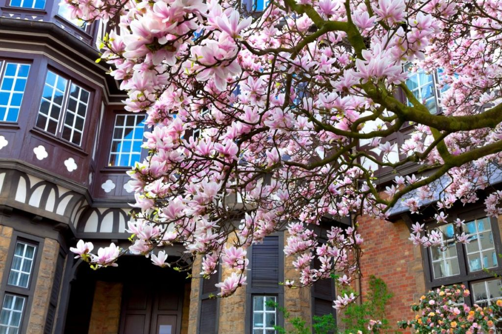 Increase the Curb Appeal of a Home The Best Trees For Your Front Yard