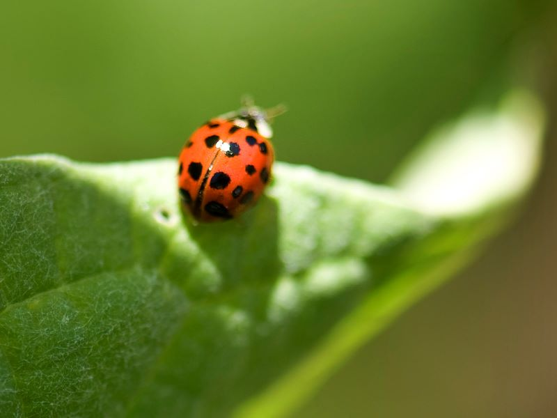 Organic Ways to Eliminate Pests and Garden Bugs in Your Outdoor Garden