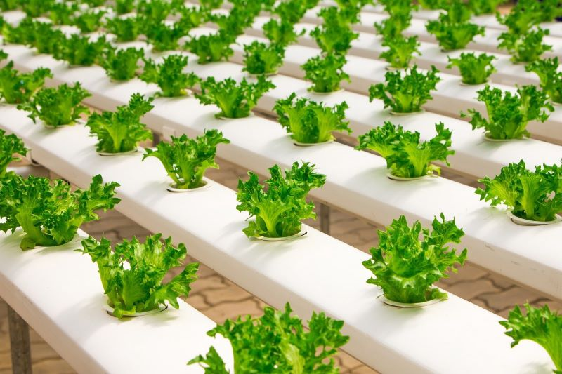 The Ten Best Advantages of Hydroponic Gardening