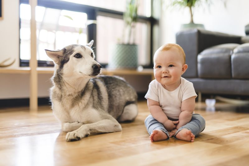Top 4 Tips in Introducing Dogs and Babies