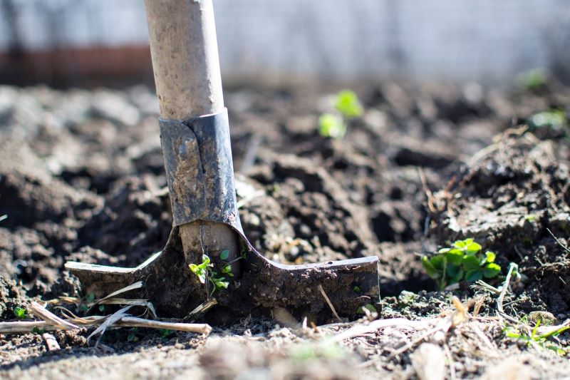 Gardening Tips for Homeowners