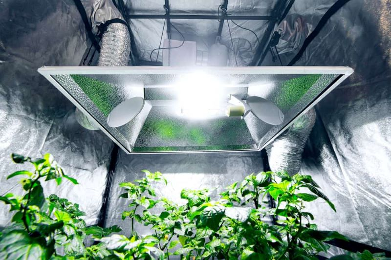How to Shop for the Best Indoor Grow Tent in Canada